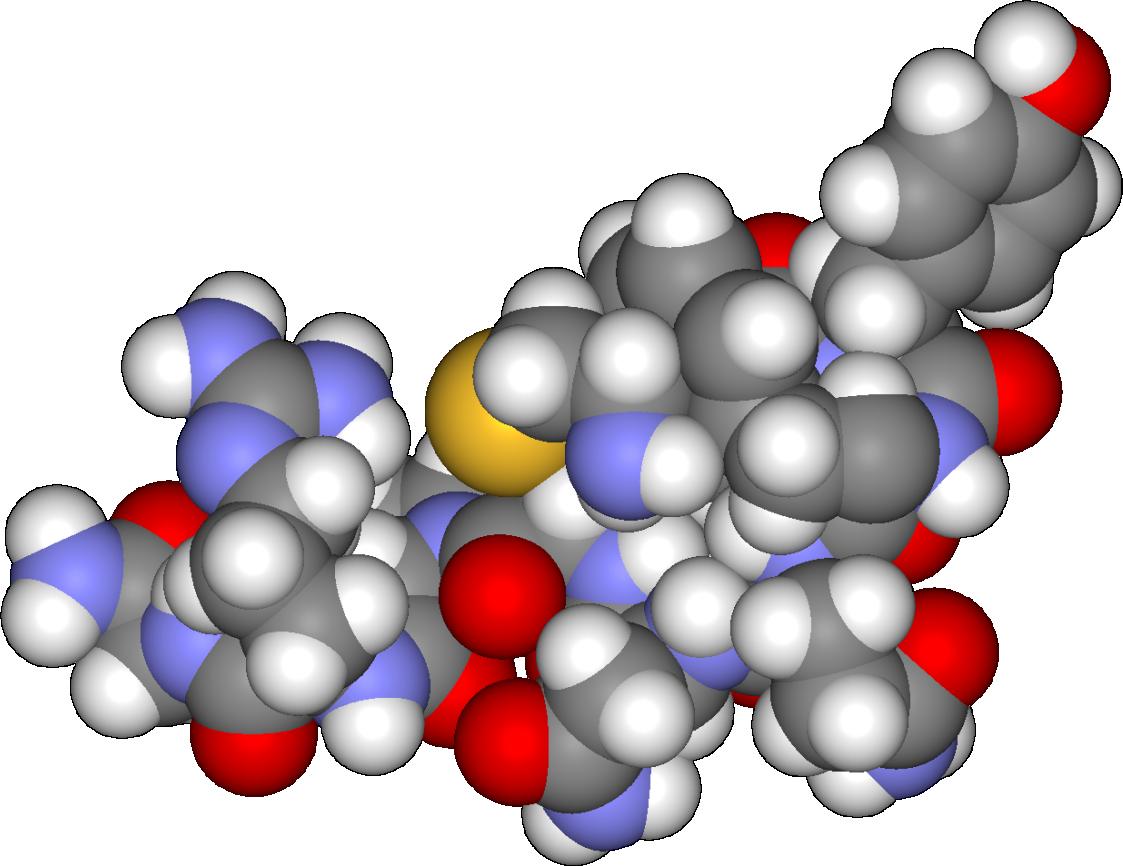Modelo tridimensional de la Hormona Antidiurética (Wikimedia Commons)