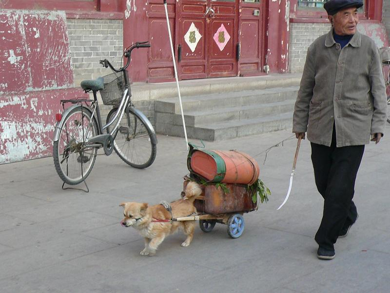 perro transportista