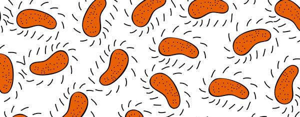 bacterias600