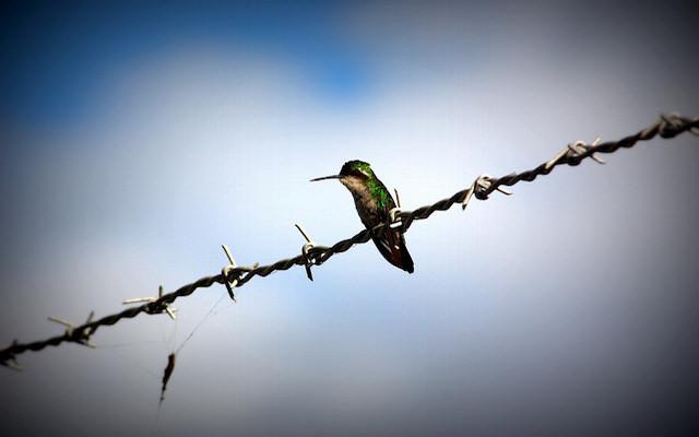 'Pausa sobre el alambre de espino'. Foto: Navis06 / CC BY-NC-ND 2.0
