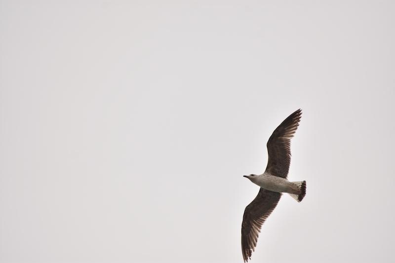 Si las aves migran, ¿por qué yo no puedo migrar? Foto: Patricia Páez.