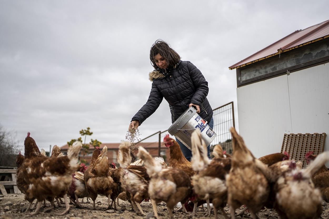Pilar, una ganadera agroecológica, da de comer a sus gallina. FOTO: Olmo Calvo