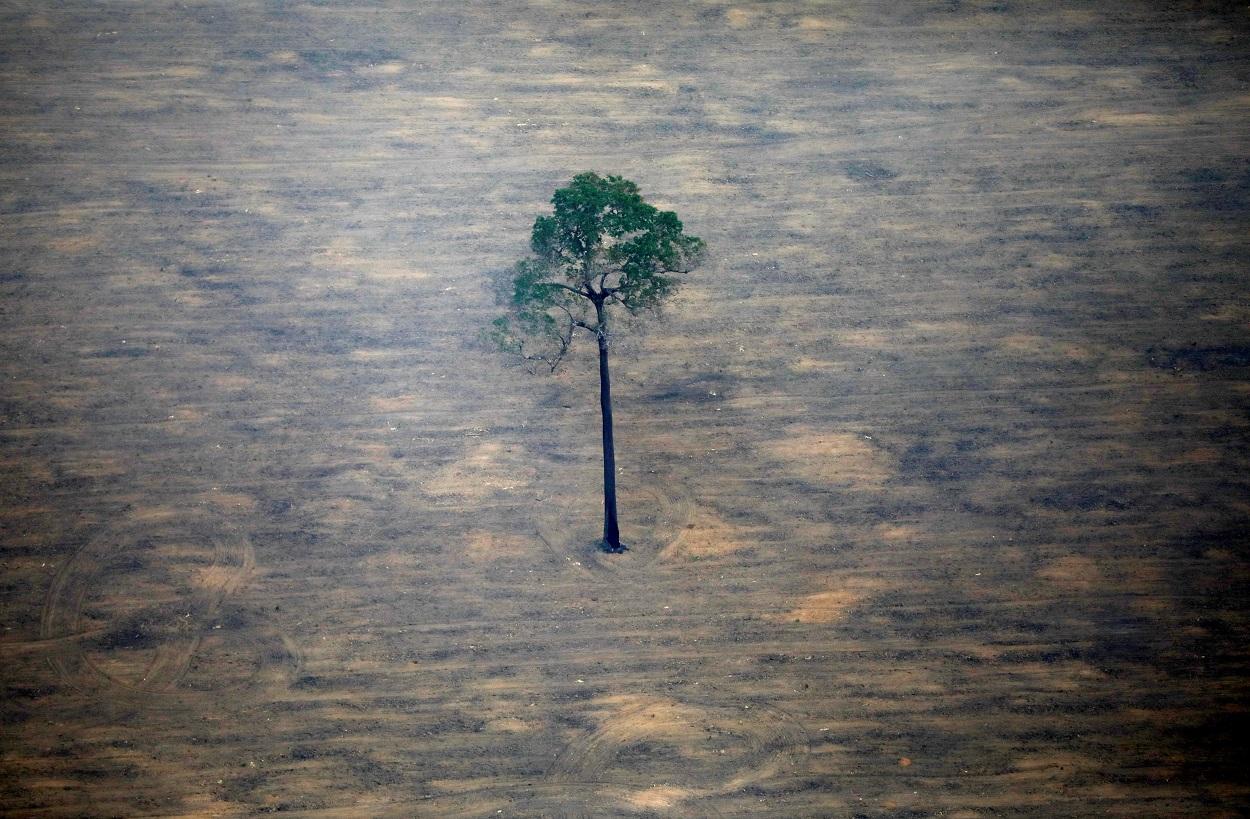 Vista aérea de una parcela deforestada del Amazonas cerca de Porto Velho. REUTERS / Bruno Kelly