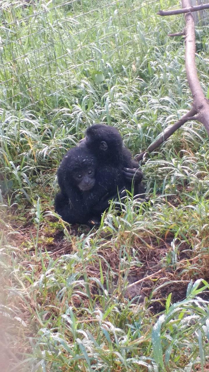 Centro de rescate de macacos en Indonesia de Wildlife Watch Dogs / Jakarta Animal Aid Network