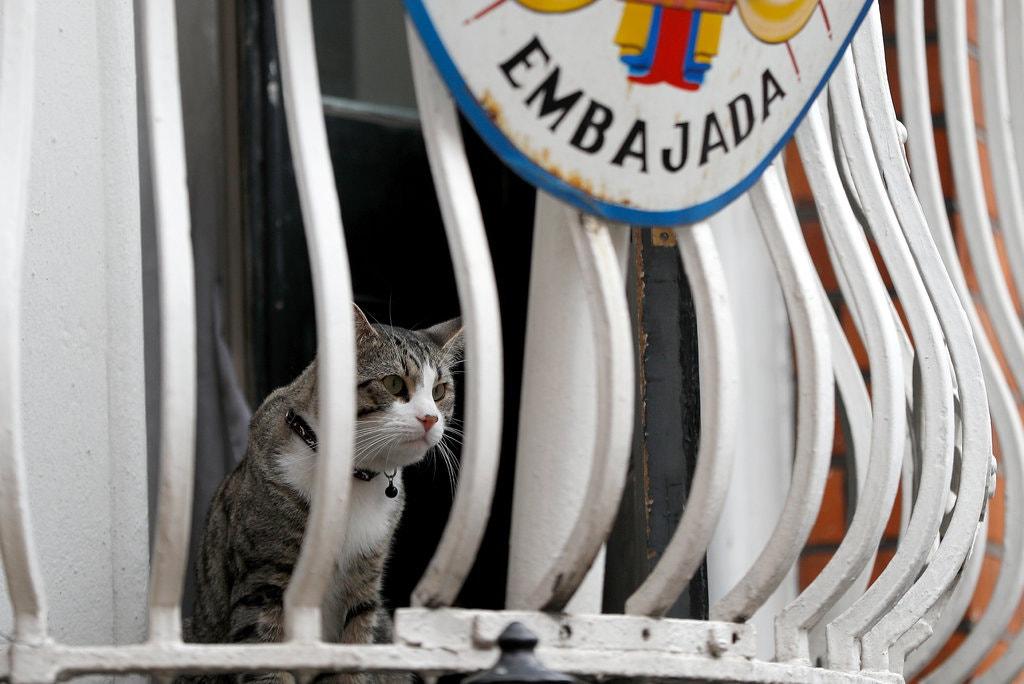 El gato Cat-stro o Michi, de Julian Assange, en el balcón de la embajada de Ecuador en Londres. REUTERS/Peter Nicholls