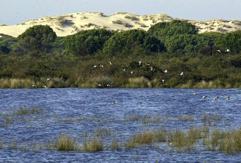 Vista del Parque Nacional de Doñana. EFE