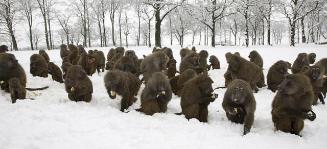 babuinos-zoo.jpg