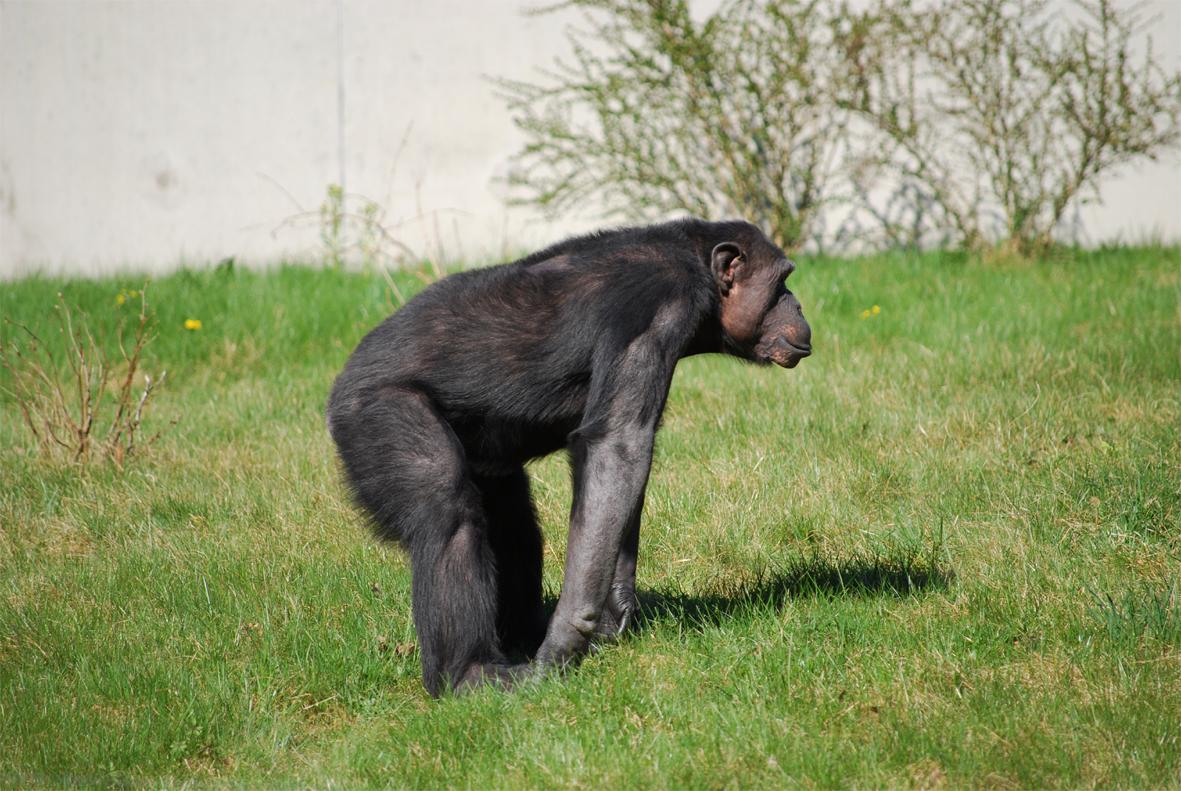 PososAnarquia_Chimpance_2