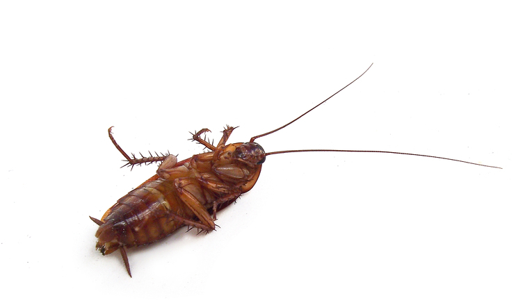 PososAnarquia_Cucaracha