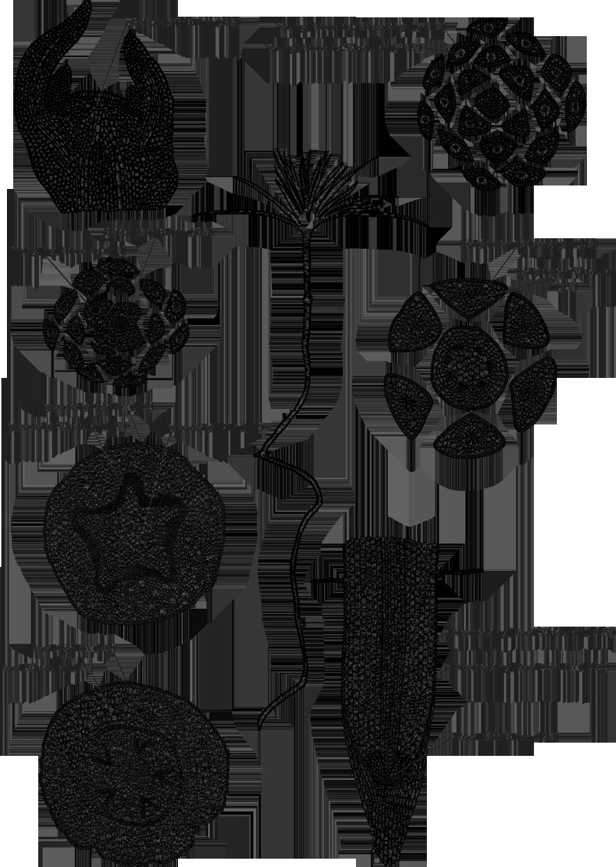 El mapa de genes que abre la puerta al pino transgénico