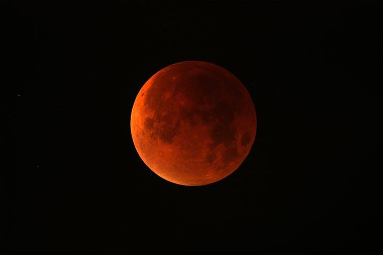 A pesar de su atractiva denominación, las lunas de sangre no entusiasman a las barnaclas cariblancas. Justinas Vitkus/Shutterstock