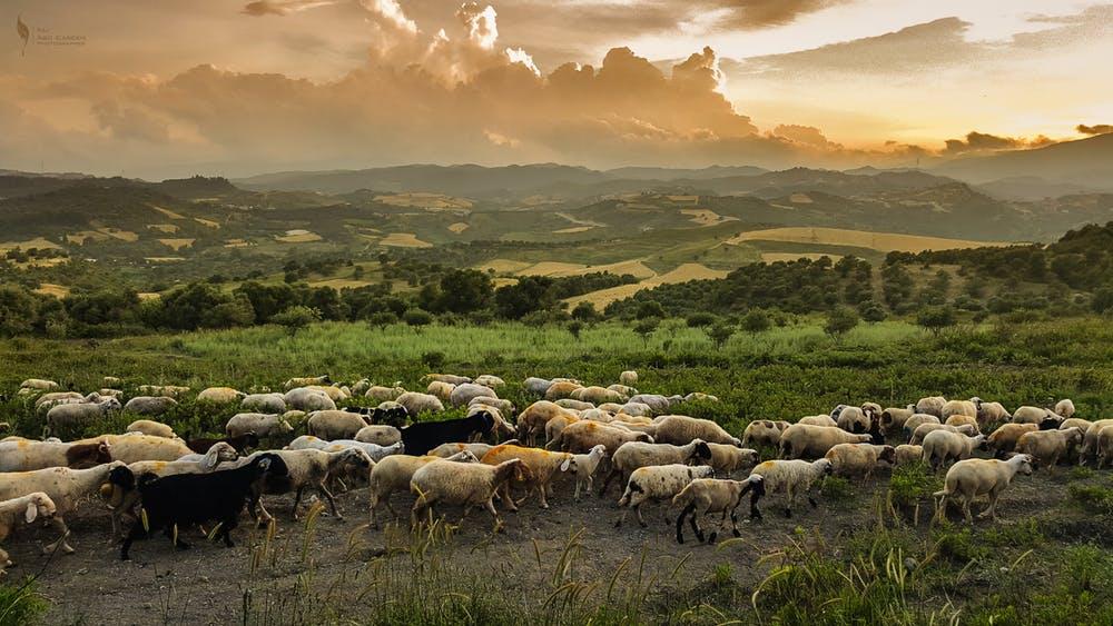 El pastoreo contribuye a la preservación de suelos. Ali Habde/Pexels