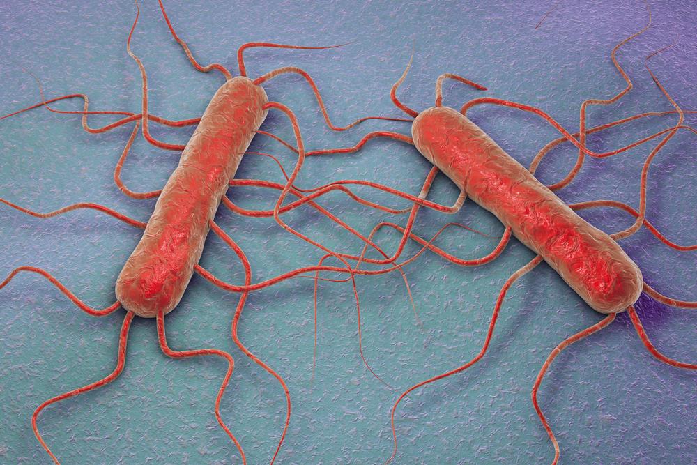 Ilustración 3D de la bacteria Listeria monocytogenes, bacteria gram positiva con flagelos que causa listeriosis. Kateryna Kon / Shutterstock