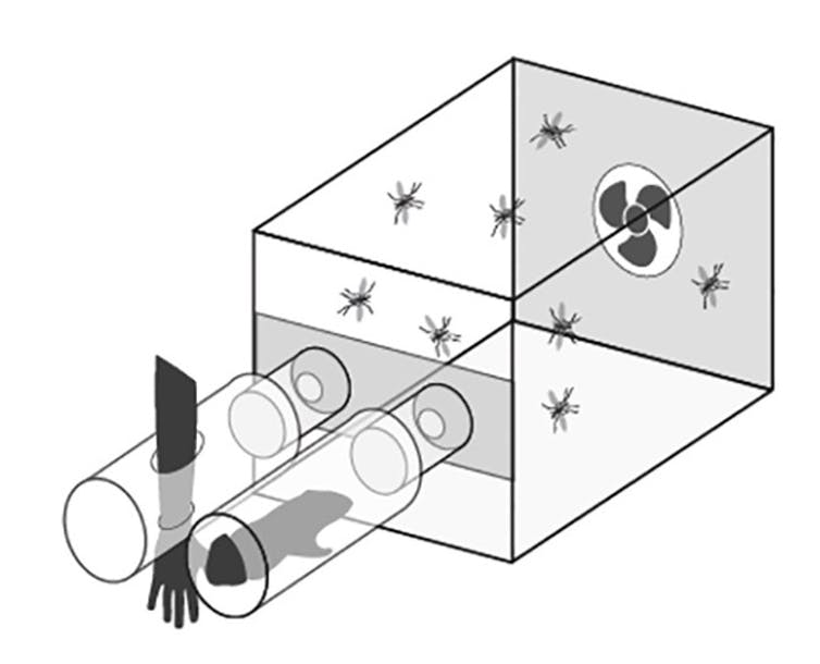 Esquema del olfatómetro empleado en la investigación.