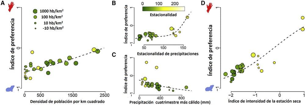 (A) La preferencia por los humanos se incrementa significativamente con el aumento de la densidad de población y en hábitats con lluvias altamente estacionales (B), mientras que disminuye en hábitats con más lluvia en la época más cálida del año (C). Las variables climáticas en (B) y (C) se pueden combinar en un índice de intensidad total de la estación seca (D). El color y el tamaño del punto corresponden a la estacionalidad de precipitación (escala en C) y a la densidad de la población humana (proporcional a la escala en A), respectivamente. Modificado y traducido a partir de la publicación original.