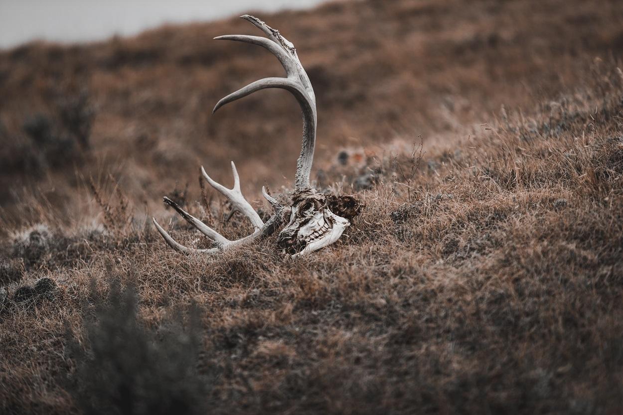 Los animales entienden la muerte más de lo que se pensaba