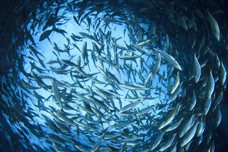 ¿Qué le ocurre al Pacífico? El océano más grande del mundo está en peligro