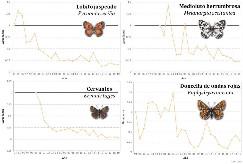 Cuatro ejemplos de especies de mariposas en regresión. Pau Colom, Author provided