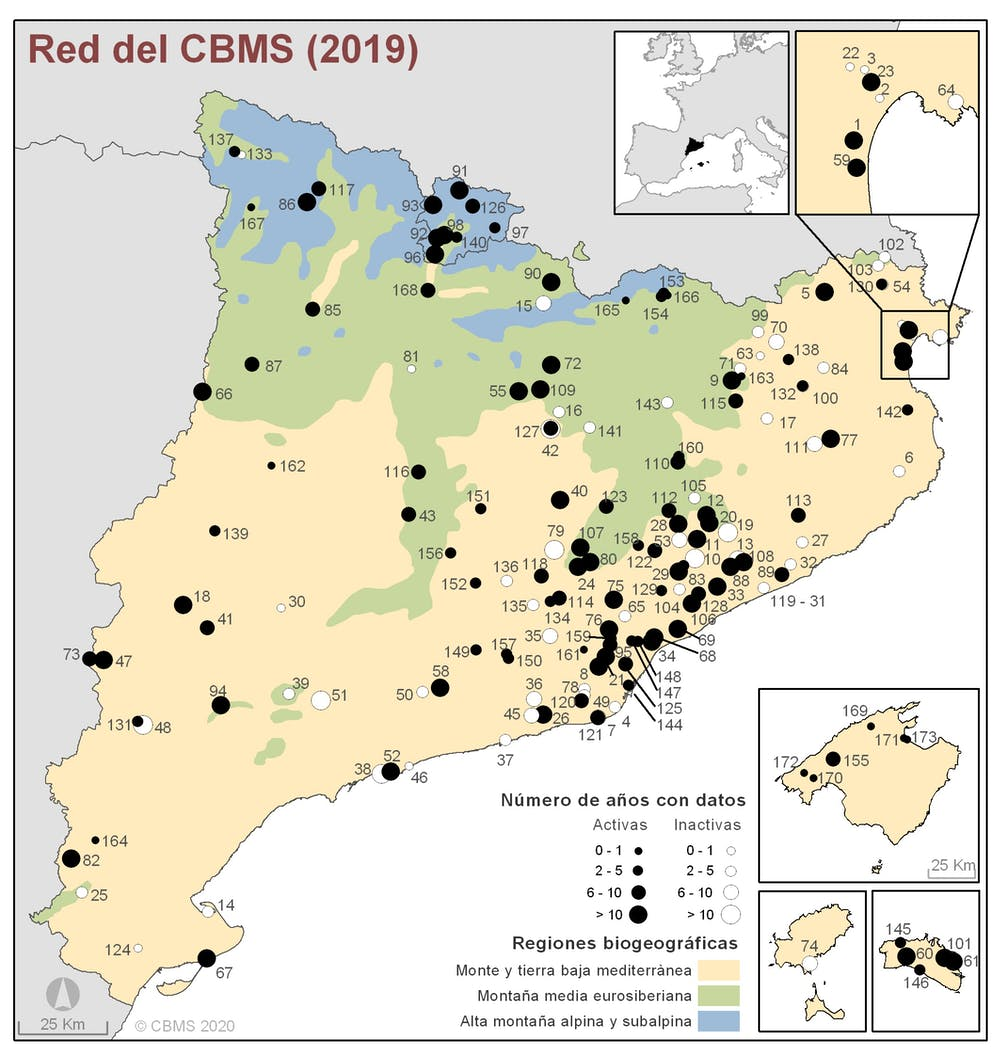 Red del butterfly monitoring scheme de Cataluña. Ferran Páramo, Author provided