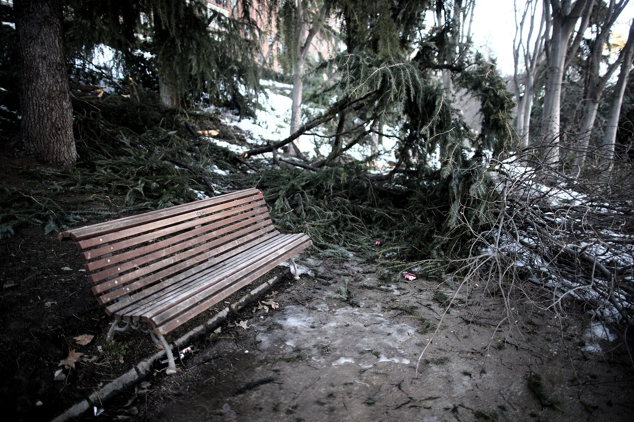 Ramas de árboles dañados por el paso del temporal Filomena en el Parque de la Fuente del Berro en el distrito de Ventas, en Madrid. R.P./Eduardo Parra