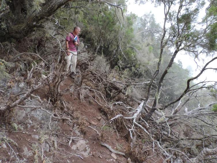Ejemplo de los daños generados por los herbívoros asilvestrados en el Parque Nacional de Garajonay
