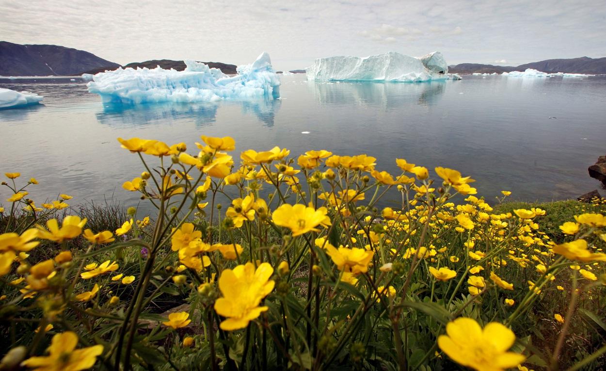 Flores silvestres en una colina con vista a un fiordo lleno de icebergs cerca de la ciudad de Narsaq, en el sur de Groenlandia. REUTERS/Bob Strong