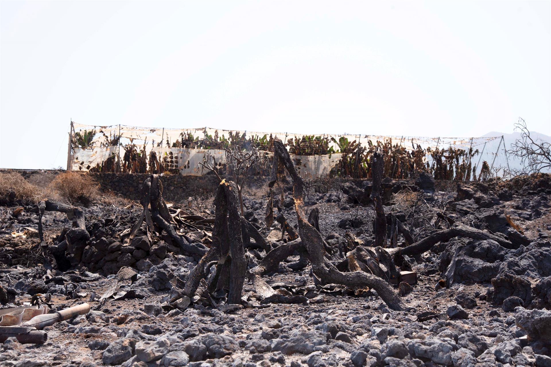 Las consecuencias del incendio declarado en Palma. EFE/Miguel Calero