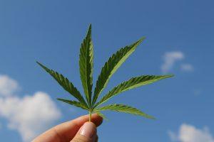 Cannabis, ni bien ni mal: regular