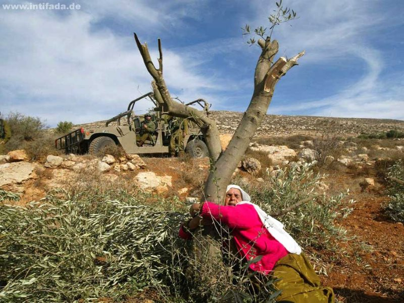 Una mujer palestina se abraza a un olivo en Cisjordania.