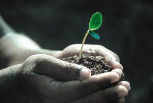 Planta para cultivo.