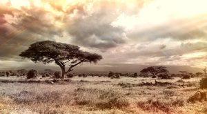 Sabana africana.