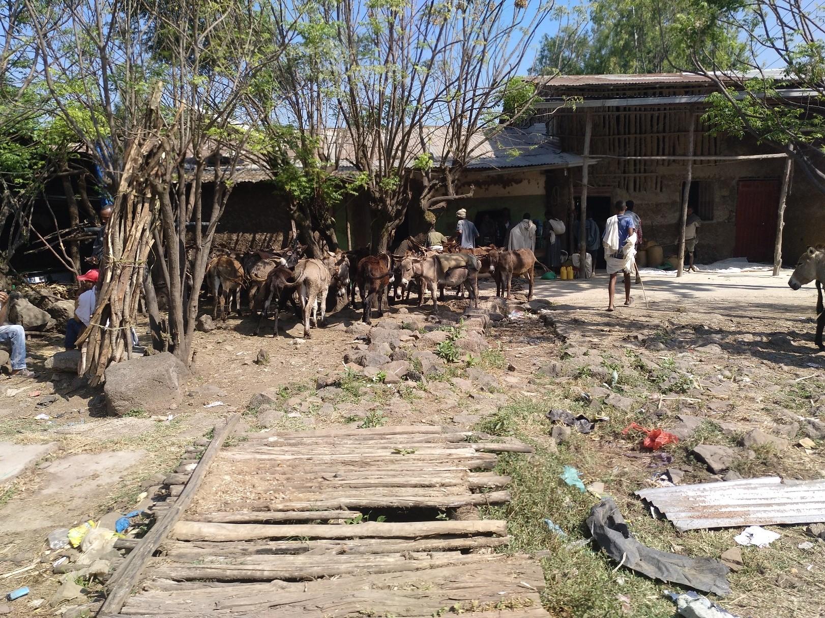 Nuestro fango: hambruna, pobreza y subdesarrollo: A propósito de burros, elixires y ambición (1/3)
