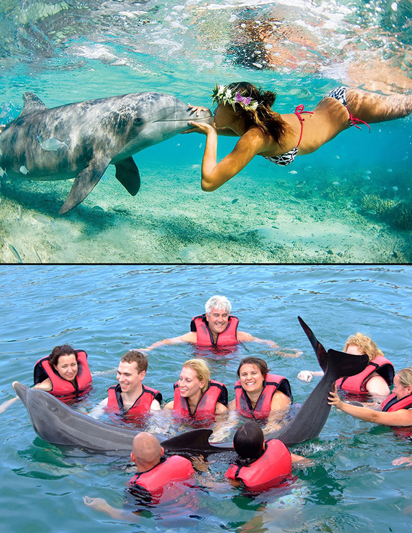 2- Swimming With Doolphins